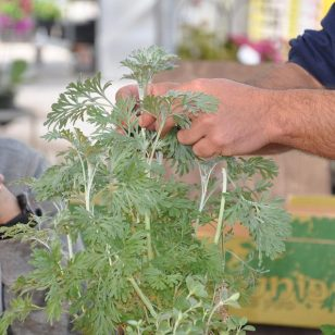 סדנא להקמת גינת ירק