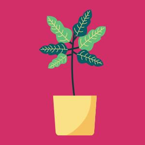 צמחי גינה ומרפסת