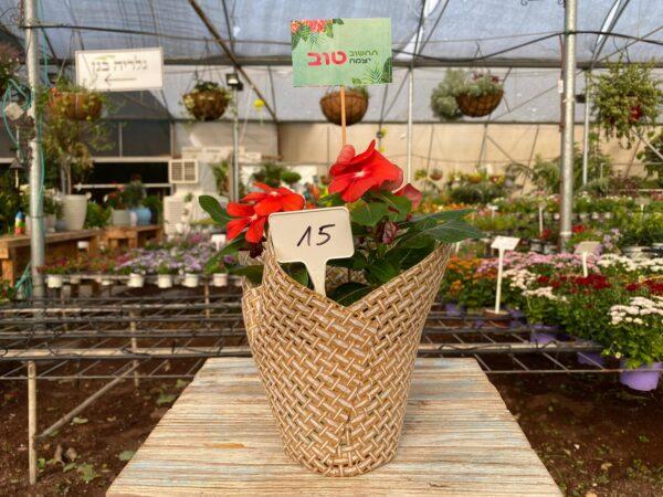 מתנה- פרח עונתי עם קאבר, תחשוב טוב יצמח טוב