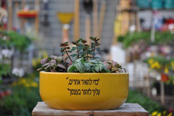 מתנה לבית, צמחים לבית. מיתוג אישי. משתלה במרכז