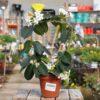 צמחים מעוצבים על קשת. משתלת מרמלשטיין