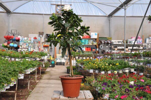 צמחים לגינה משתלת מרמלשטיין