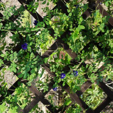 קירות ירוקים: כיצד להשתמש בתערובת של צמחים מלאכותיים ואמיתיים