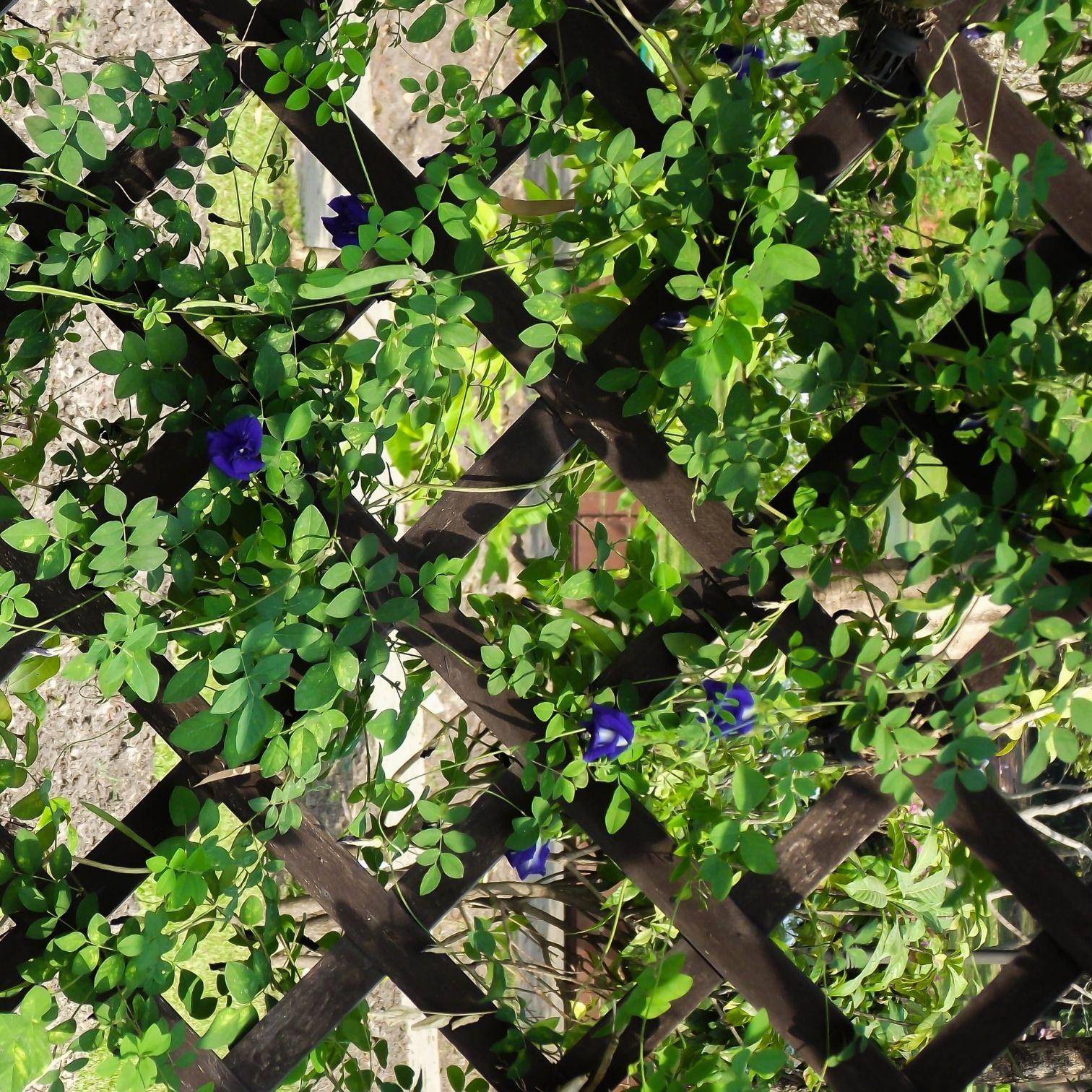 קירות ירוקים | צמחייה חיה | צמחייה מלאכותית