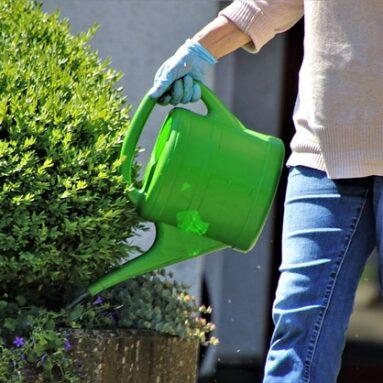 טיפים להשקיה נכונה של הגינה